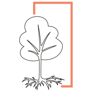 Icon of a tree with good roots in a frame growth branding positioning